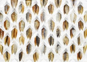 Fischhaut, 70x100